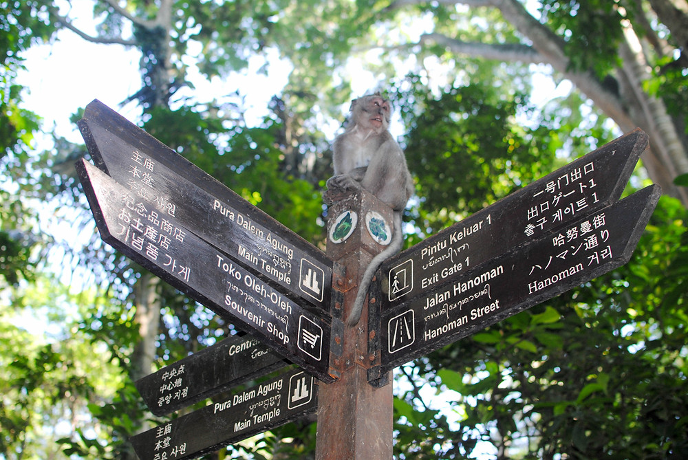 monkey forest sign ubud