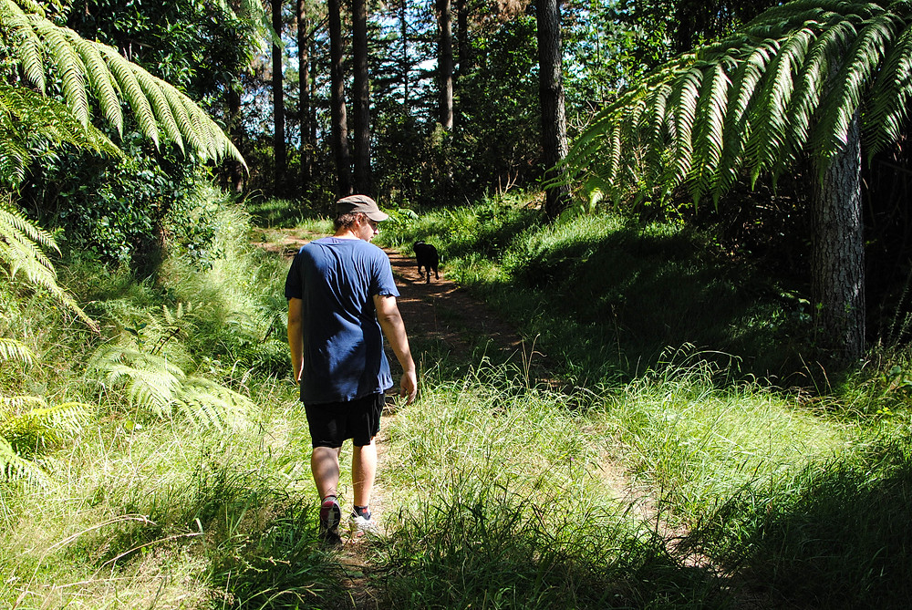 hike lake mangamahoe