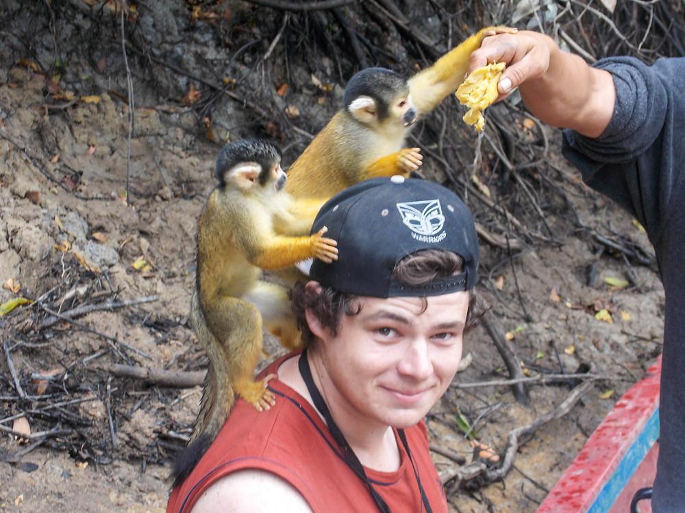 capuchins amazon