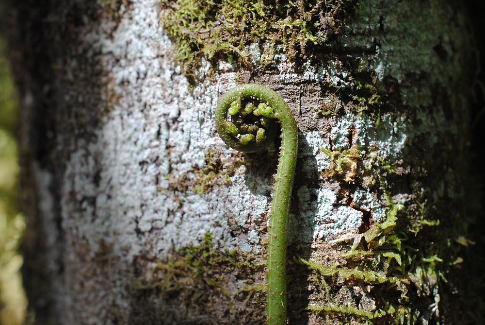 koru egmont national park