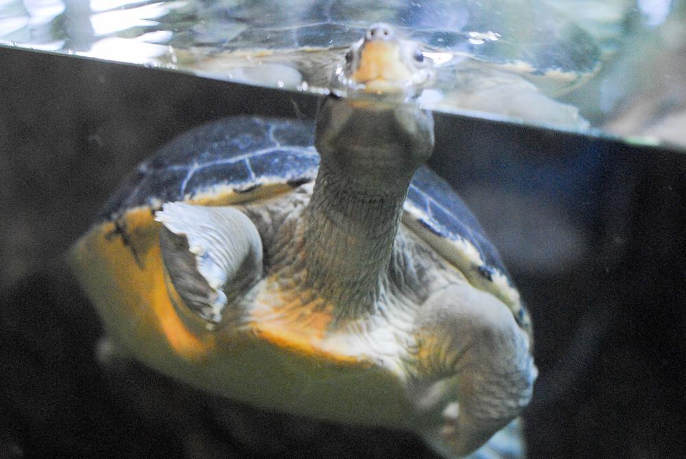 turtle singapore
