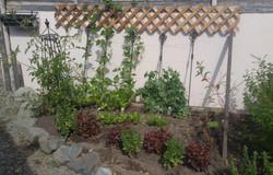 garden7-11-2020