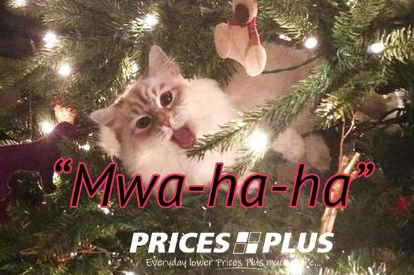 evil cat xmas tree.jpg