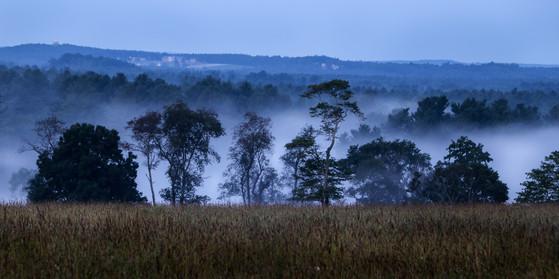 General Field fog 2-1.jpg
