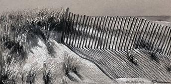 fence on the dunes.jpg