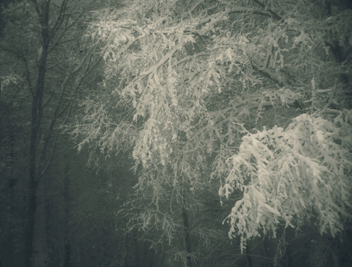 Bent with Snow