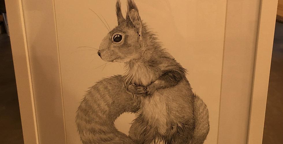 'Squirrel' Framed print - A3 Frame