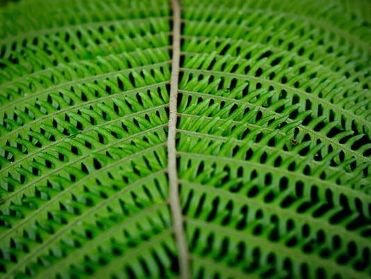 Fotografando a natureza | Núcleo do Engordador