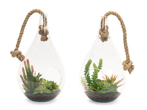 Hanging Succulents (Set of 2)