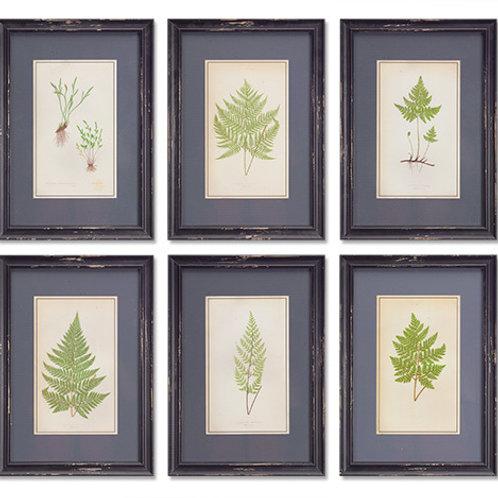 Framed Fern Prints