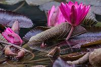 Méditation Beauvechain, moments zen en famille ou entreprise