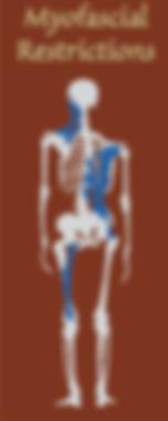 Amy's-Body-Therapy-www.amysbodytherapy.com-myofascial-restrictions-Woburn-MA