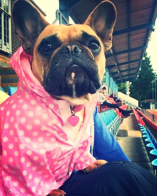 Lola the french bulldog!