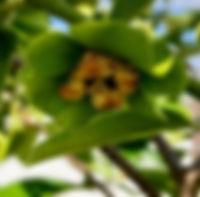 blooming.jpg