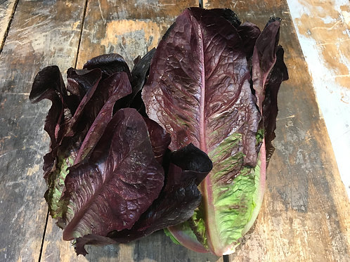 Lettuce Romain Red