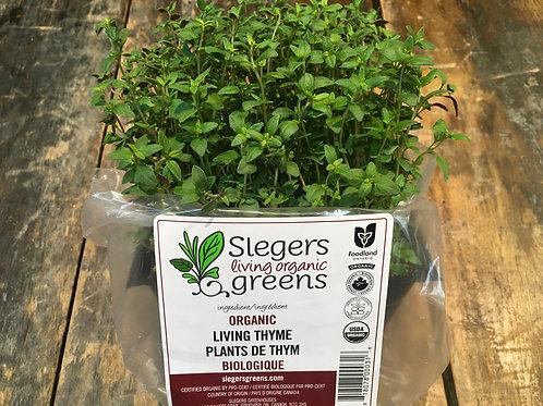 Micro Greens-Thyme (Slegers)