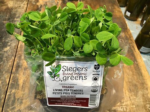 Micro Greens-Pea Tenders (Slegers)