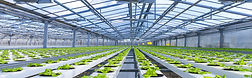 Aeroponics Agricultural Technologies