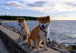 Toshi and Missy at Dirhami, July 2020