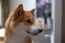 Toshi, October 2020