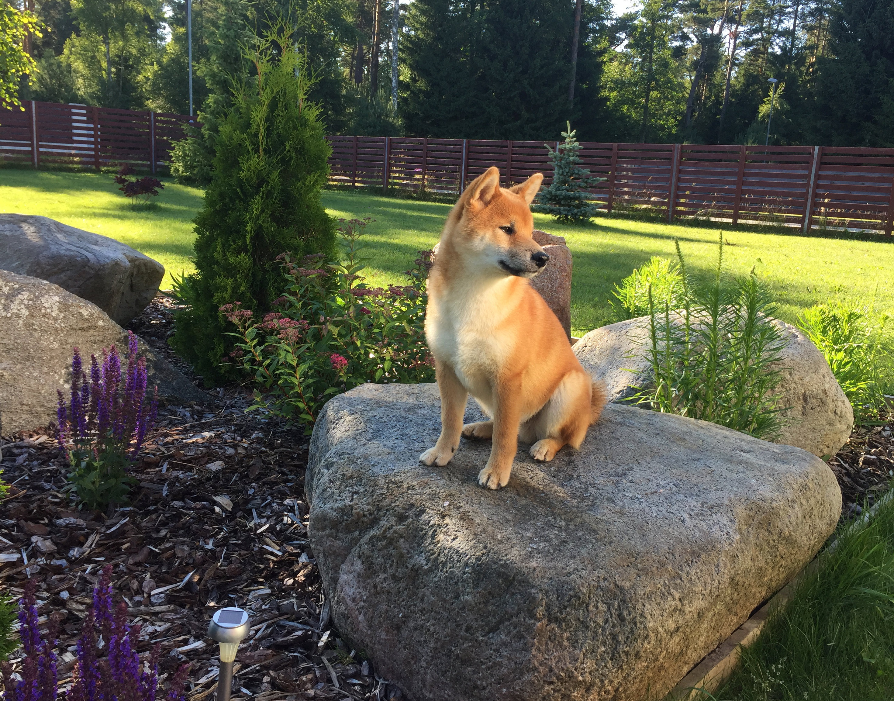 Toshi on the stone, July 2017
