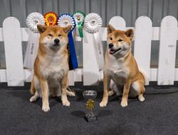 Toshi and Missy as winners at Tartu CACIB November 2020