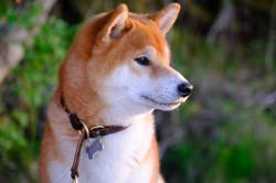 Toshi portrait, June 2020