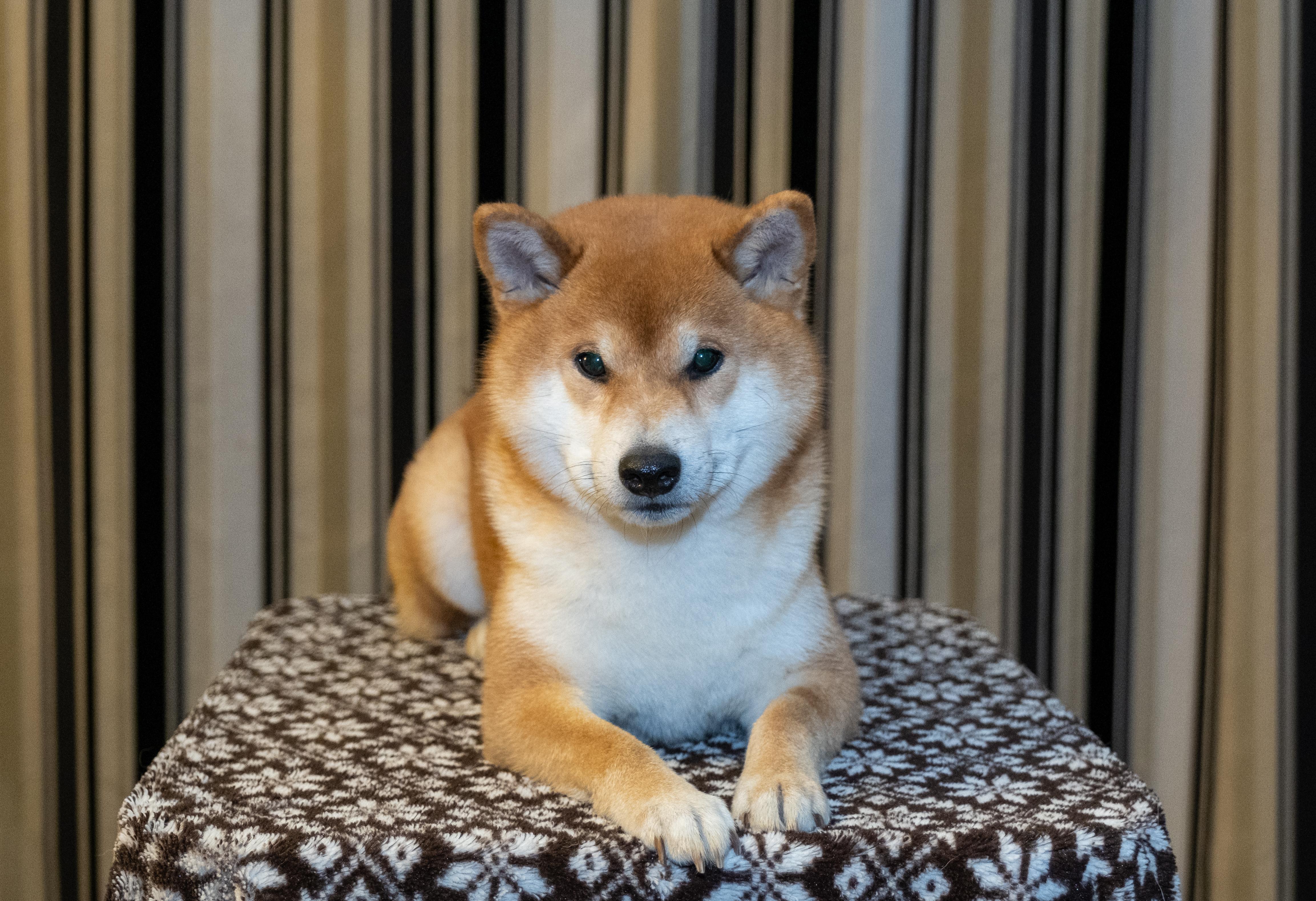 Toshi posing, November 2020