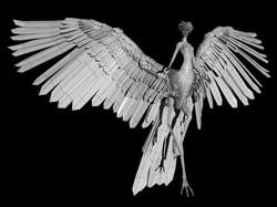 fairy typology 1