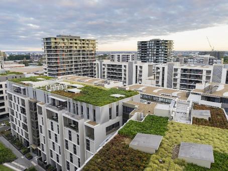 Ricerche internet: Con Ecosia un nuovo modo per sostenere la biodiversità