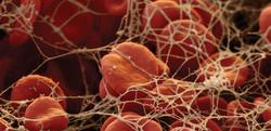Blood Cells + fibrine 1920x930