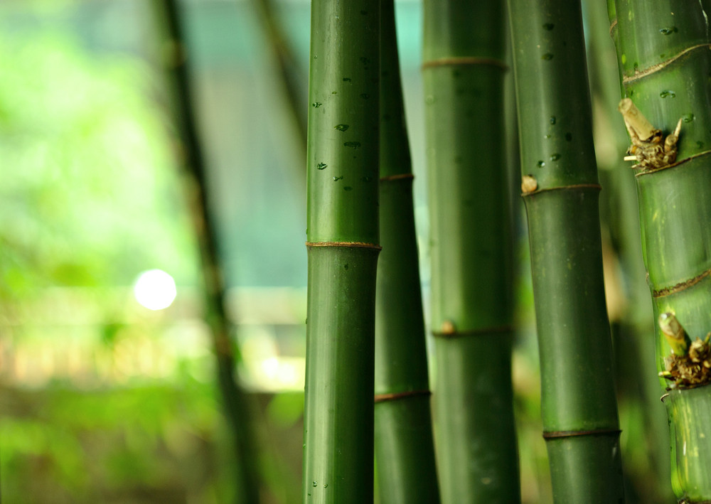 Bamboo serum skincare. How to use bamboo for skin.