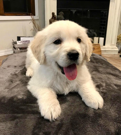 A happy little fellow-Finn