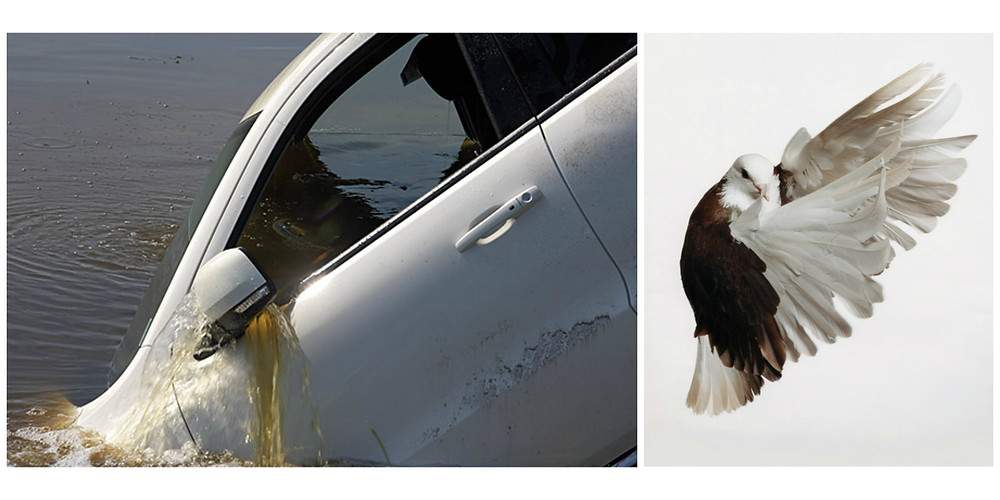 Durango in the Canal, Belle Glade, FL and Pigeon by Roe Ethridge.