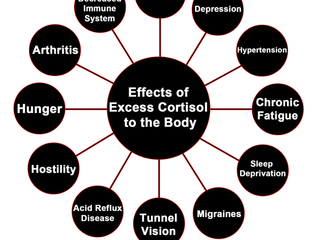 What does Cortisol do in our bodies.