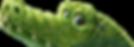 gator.png