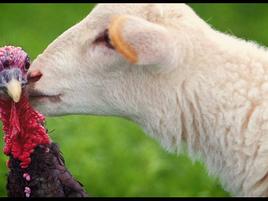Lamb on Thanksgiving?