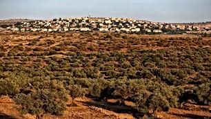 اراضي في فلسطين للبيع
