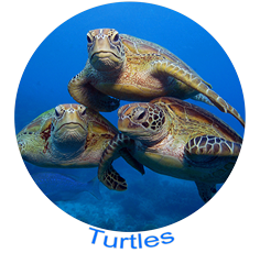Turtle Icons.png