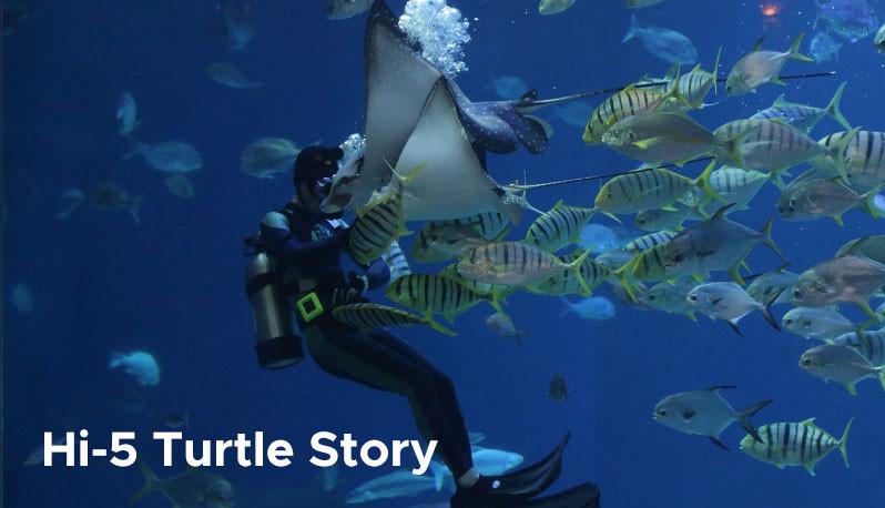 Hi-5 Turtle Story