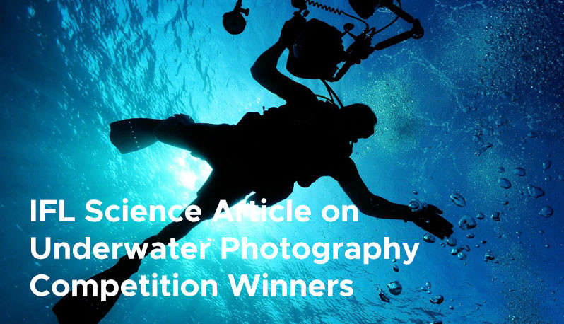 IFL Science Article on Underwater Photography Competition Winners