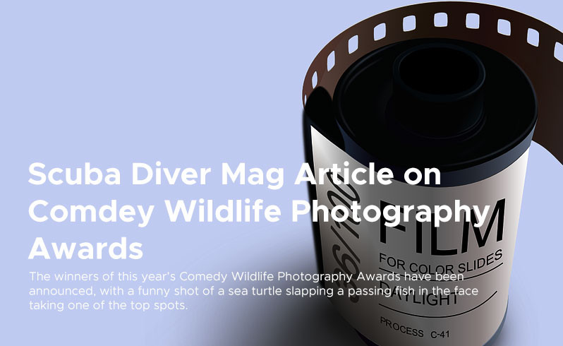 Scuba Diver Mag Article on  Comdey Wildlife Photography  Awards