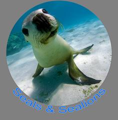 Seals & Sealions.png