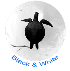 Black & White Icon.png