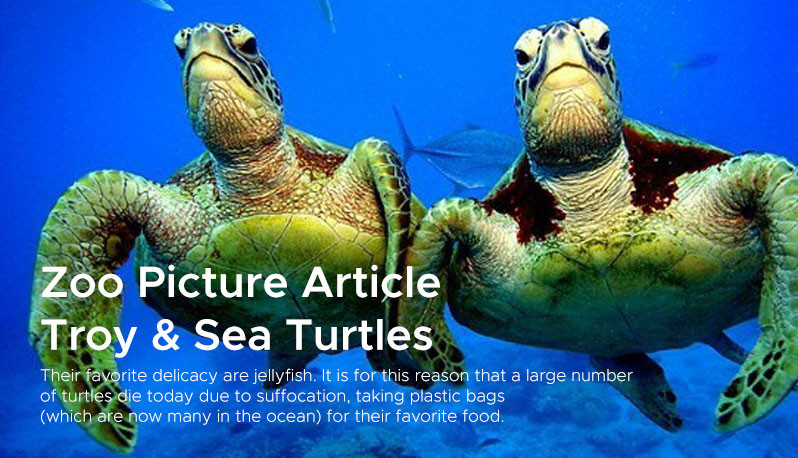 Zoo Picture Article  Troy & Sea Turtles