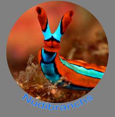Nudibranchs Icon.png