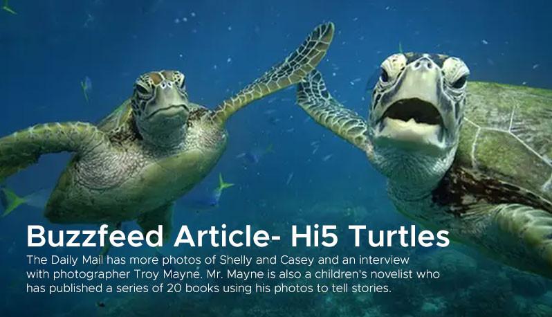 Buzzfeed Article- Hi5 Turtles