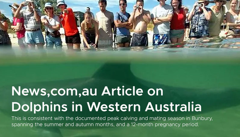 News,com,au Article on  Dolphins in Western Australia 