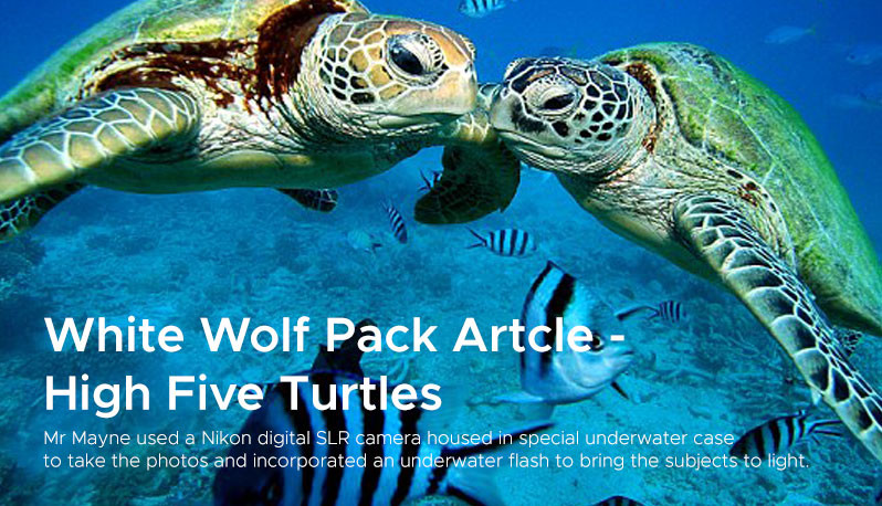 White Wolf Pack Artcle -  High Five Turtles
