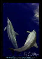 mammals (4).jpg